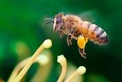 Пчелы,  пчелосемьи,  пчелопакеты
